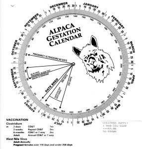 Gestation Calendar Wheel, Alpaca